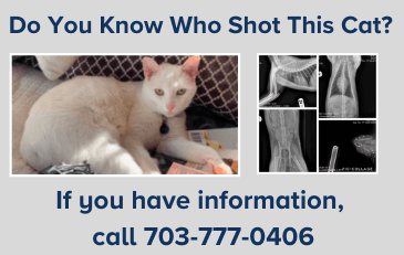 Image of Do You Know Who Shot This Cat Graphic