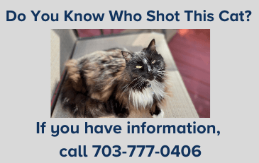 Image of cat before shooting